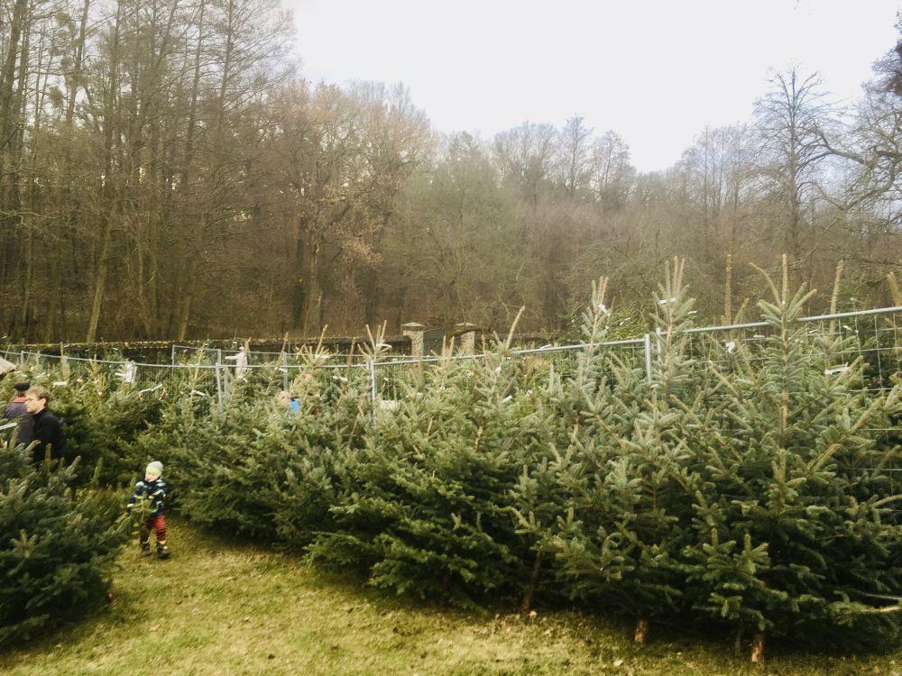 Weihnachtsbäume im Forsthaus Kreyern